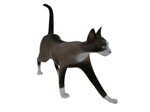 3D Model Cat free download