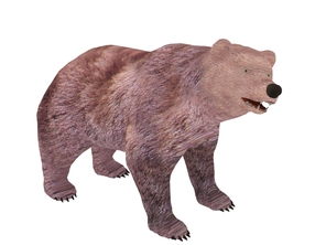 3D Model Bear animals free download