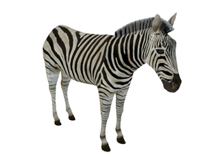 3D Model Zebra animals download