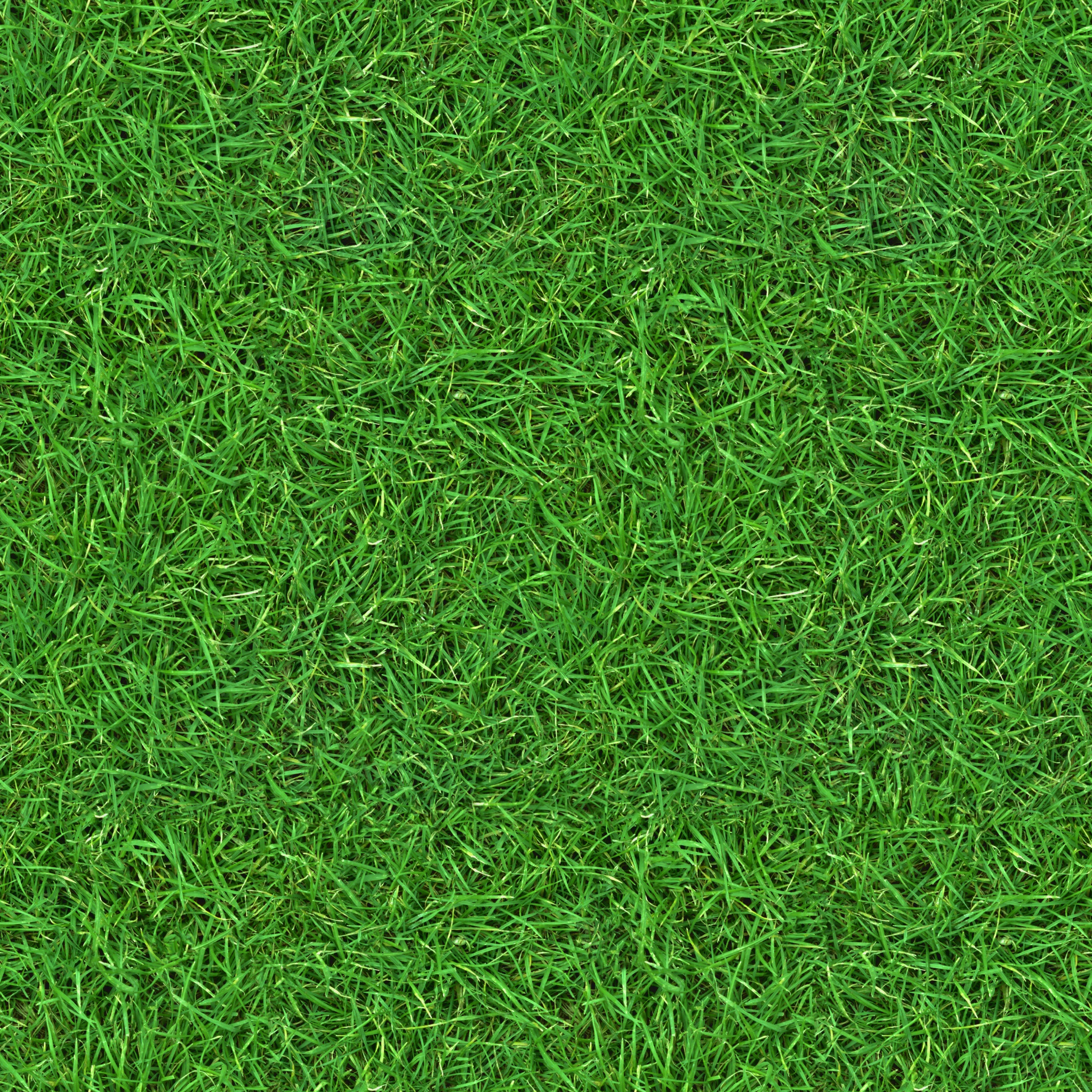 3D Textures Grass Collection Free Download (page 1