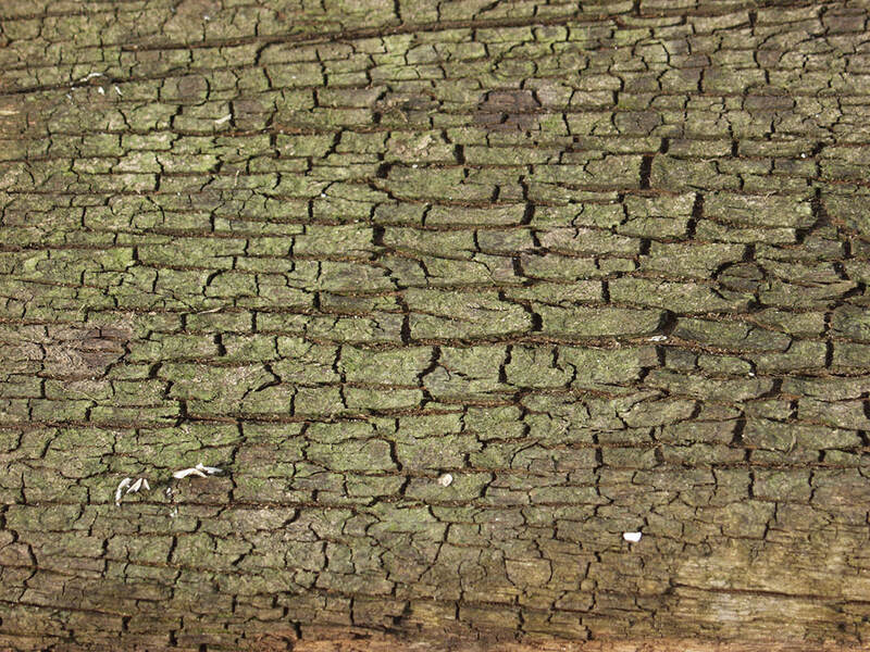 bark texture seamless 2