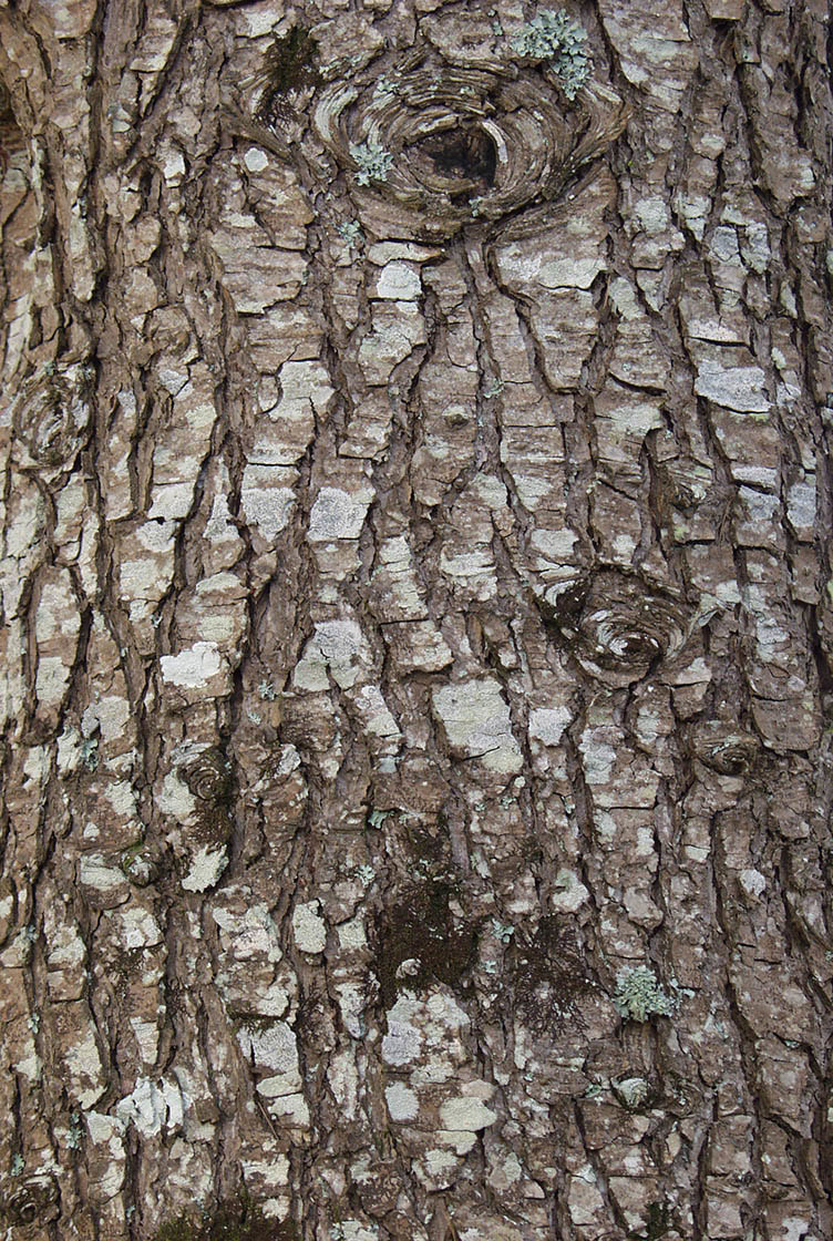 bark texture seamless 3