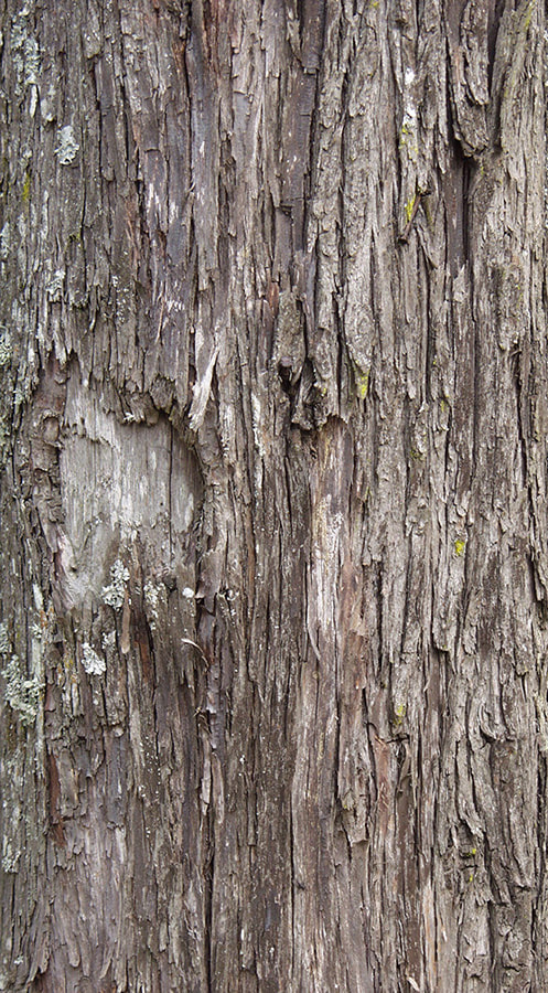 bark texture seamless 4