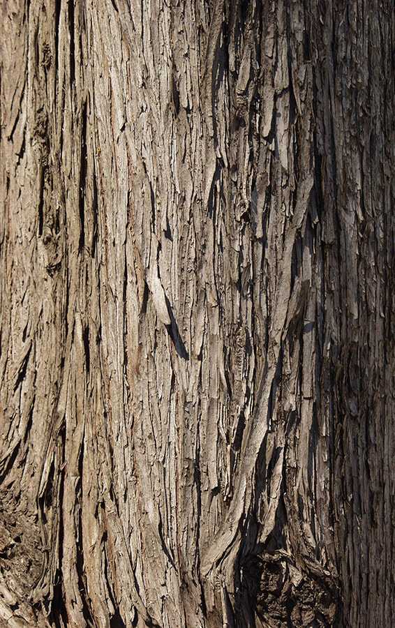 bark texture seamless 5