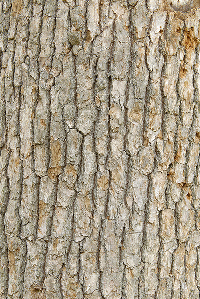 bark texture seamless 6