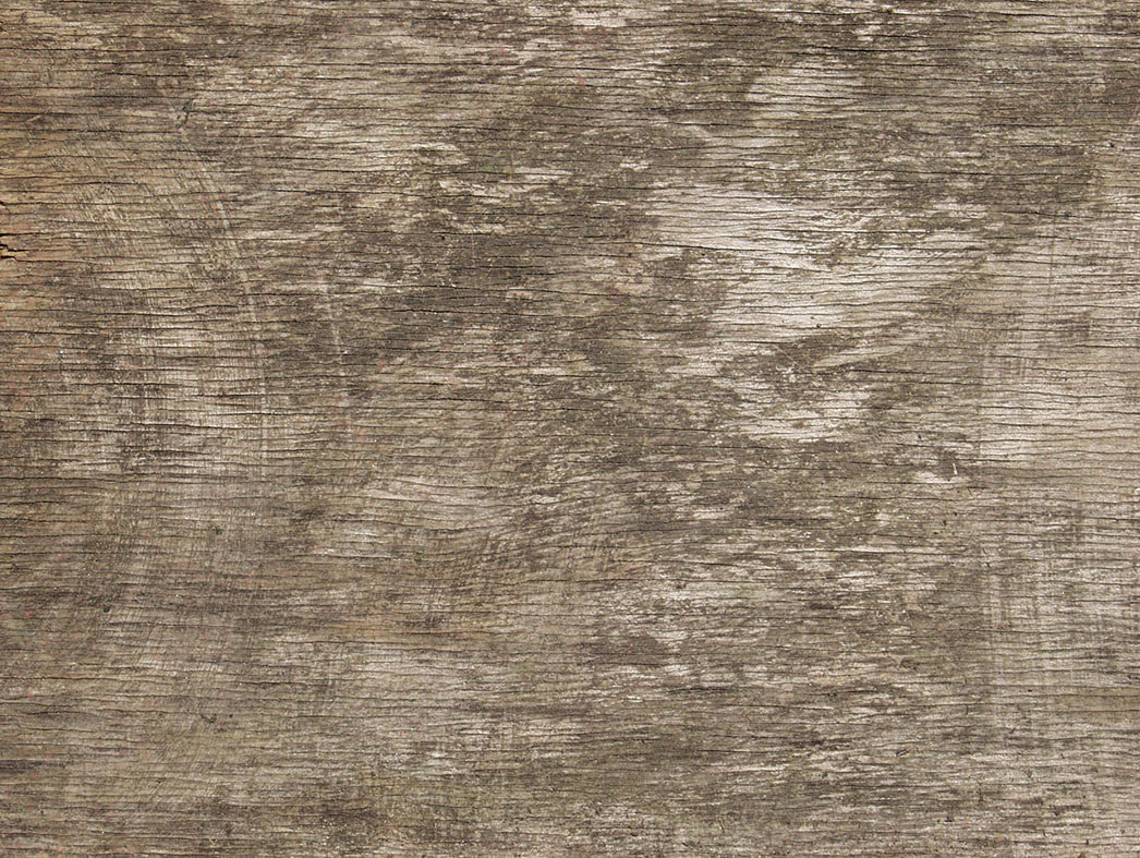 bark texture seamless 8
