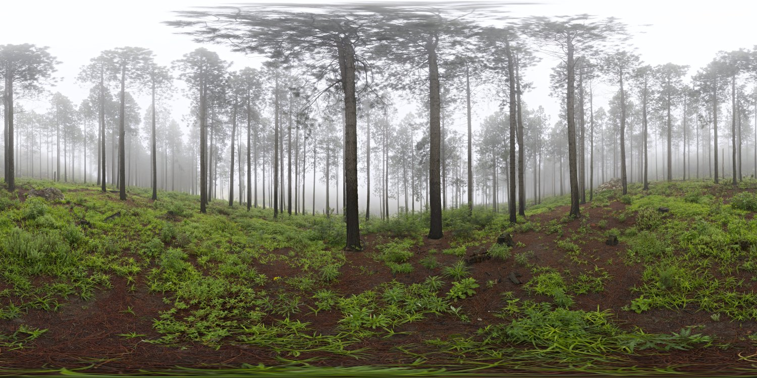 misty pines full view for HDRI
