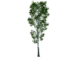 Trees 3d model free download