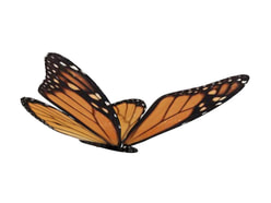 3D model Butterfly free download