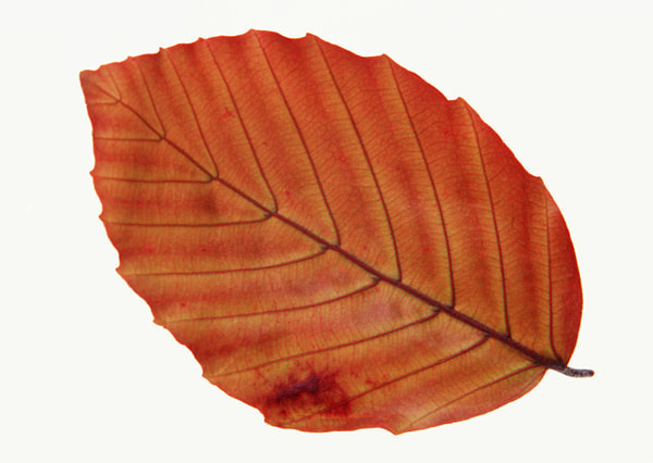 texture of a leaf 5